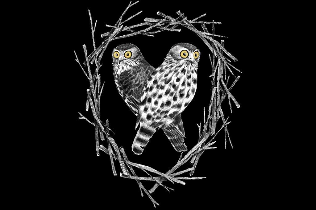 Alist - Barking Owl